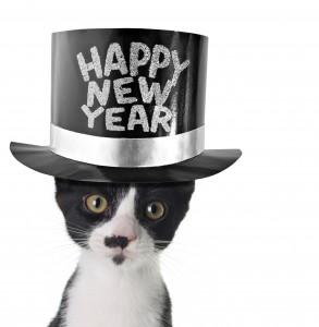 new-year-cat